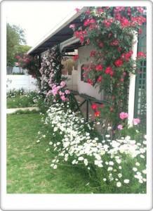 Greendoor Cottage2 front veranda